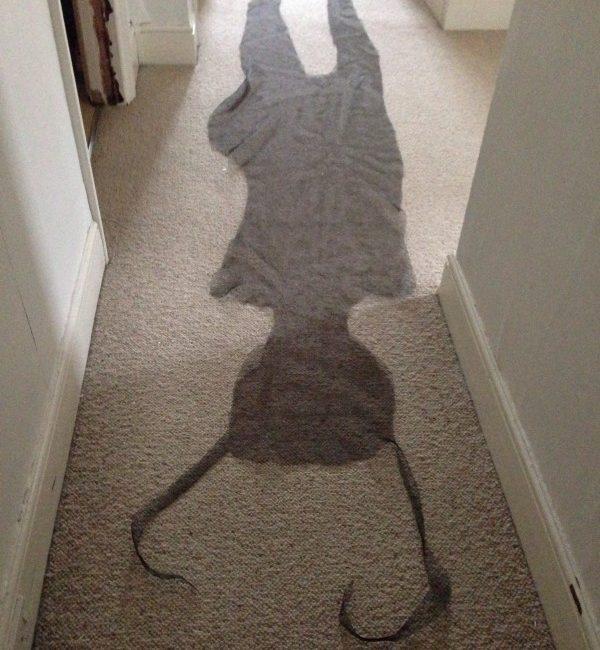 Shadowcatching